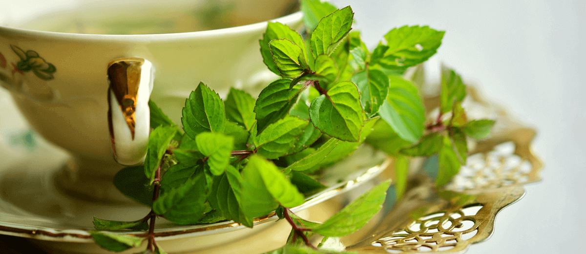 紅茶に期待できる健康作用